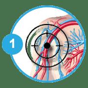 Σχηματική απεικόνιση κυκλοφορικού συστήματος